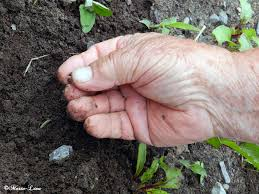 main terre